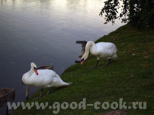Продолжаю Очень красивое озеро в Коваливке - 2