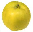 ЛЕТНИЕ СОРТА МЕЛБА (ЛАЗУРНОЕ) Плоды округлой или округло-конической формы слабо-ребристые - 2