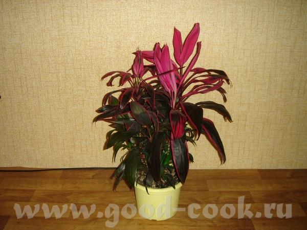 Извините исправляюсь, я первый раз фотографирую и отправляю фото Карделина моя не цветущая орхидея,...