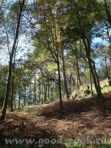 вот такие ворота я открывала )) набрели мы на лес, где я, с щенячим восторгом пыталась прогуляться,... - 2