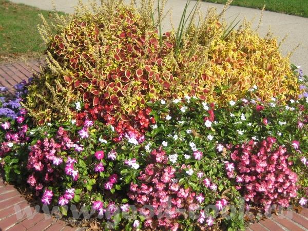 а потом мы набрели на что то типа маленького ботанического сада с красивыми цветами