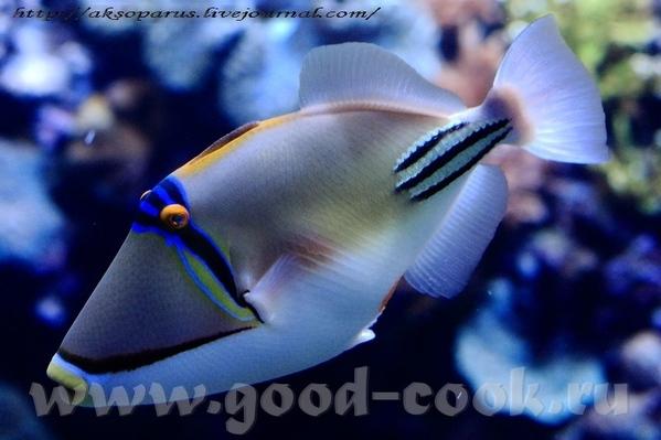 Кстати, эту славную рыбку зовут ПИКАСО Напоследок покажу свои прошлые картинки, только с правильным... - 3