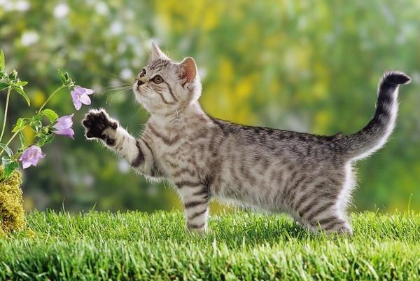 Кому кошки нужны Кошкин форум - 4