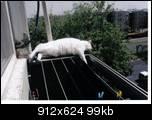 Просьба уменьшить эту вызывающую опасение за кошку фотку до 500х500 =Модератор= Пробую уменьшить