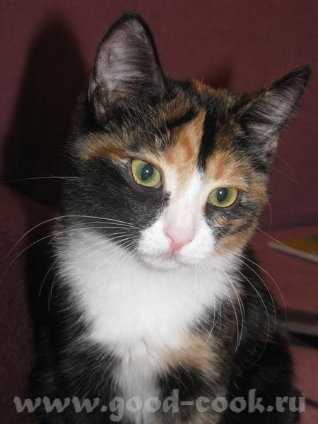 Здравствуйте, знакомтесь мои бандитки старшая, мама в мороз подобрала беременную кошку, Буся родила... - 3