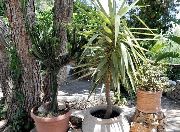 Во дворе церкви находится восхитительный сад , где можно любоваться различными икебанами из камней,... - 6