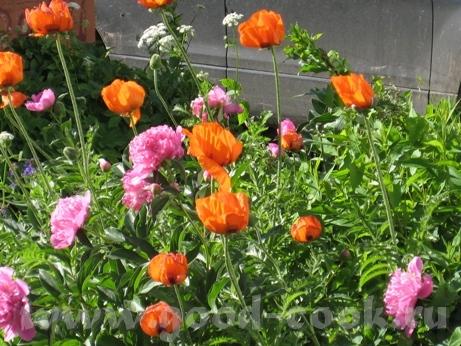 Покажу вам ещё немного цветов рядом со своим домом - 5