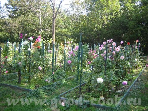 а потом мы набрели на что то типа маленького ботанического сада с красивыми цветами - 2