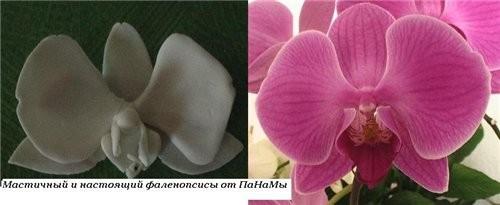 А вот ещё - попробывала сделать Орхидею(Фаленопсис) с натуры, подкрашивать не стала, просто сделала...