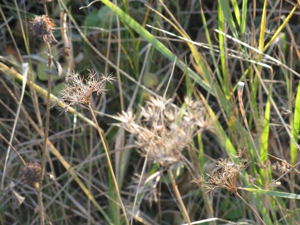 Танюша красивые фото, мох и листики дубовые - 7
