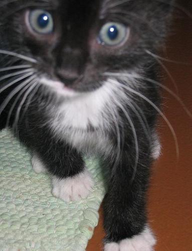Какой же у тебя симпатичный тазиковый котик - 3