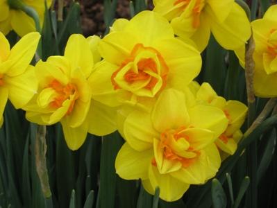 Покажу ещё несколько фоток с цветами из того-же скверика мне фотка понравилась с геоцинтами Танюш,... - 4