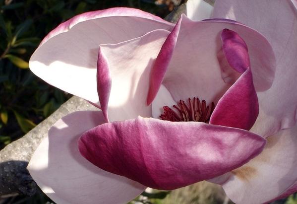 Так ведь это очень xорошо что появилось больше народа- форум на то и держится Весна, цветут магноли... - 8