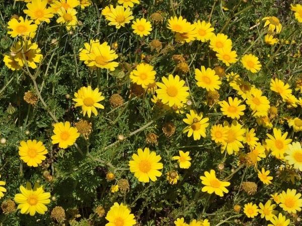 На скале,среди осколков древнего строения растут цветы - 2