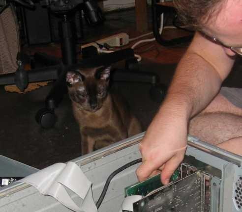 Сомнений нет - этот Кот нас выбрал потому, что он еще и компьютерщик