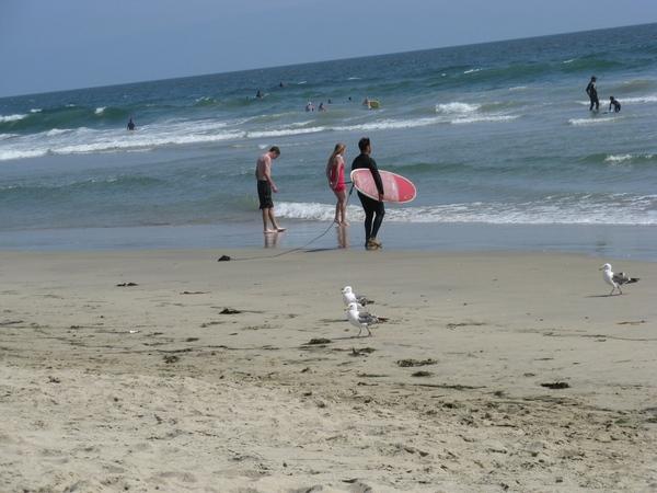 И еше немного пляжа c океаном, флорой и фауной и ee обитателями птицы похожие на пеликанов ловят ры...