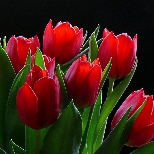 Дорогие девочки нас, прекрасных и неповторимых, с весенним праздником 8 Марта
