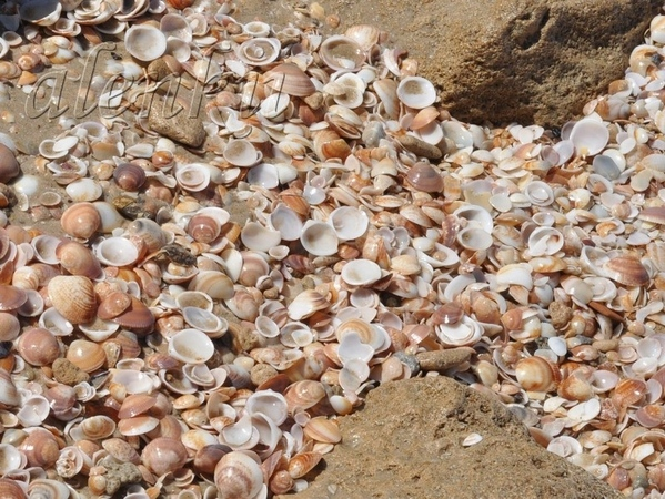 Медленно бредем по мягкому морскому песку - 2