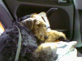 Мой красавец едет из салона собачьего-его там мыли,сушили,короче,холили и лелеяли целых полтора час...