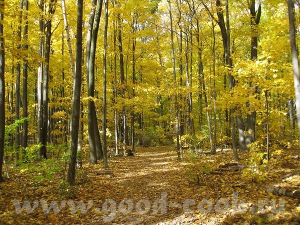 Осень в Онтарио (Канада)