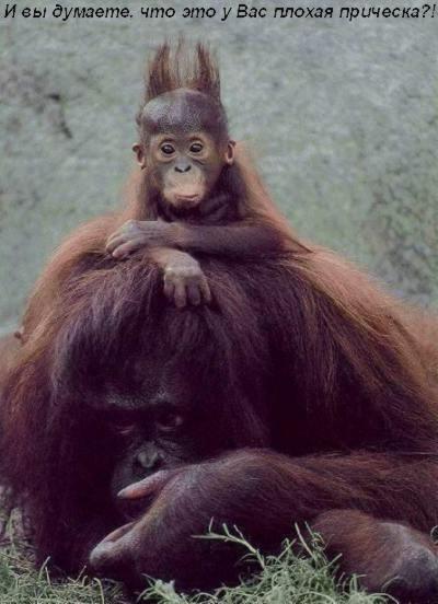 Вот нашла про обезьянок - 2