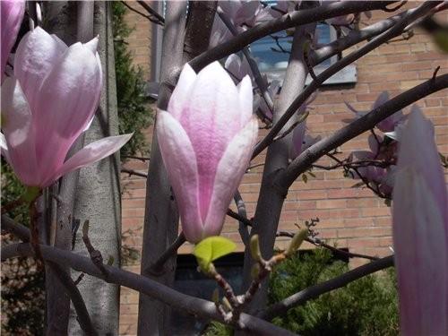 А вот такая прелесть росла и цвела под окнами нашего апартмента - 5