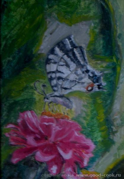 +Бабочка