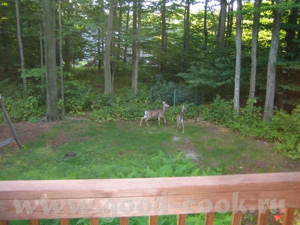 А ещё рано по утру в воскресенье у нас были вот такие гости