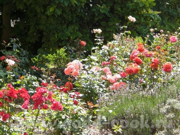 Цветет рододендрон: Возде дома расцветают розы: Вечное и прекрасное небо: - 2
