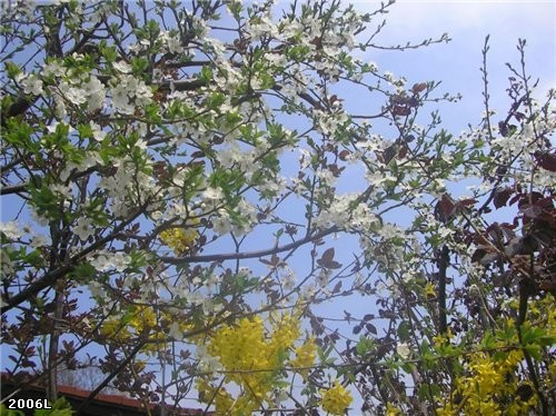 Весна-везде весна