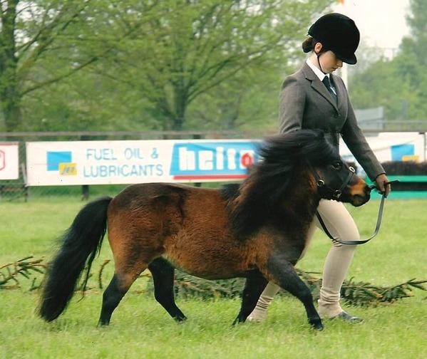 Шетландский пони 2