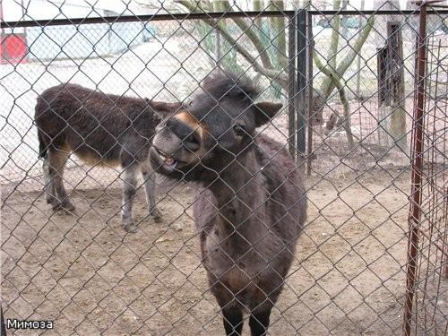 А рядом мини-зоопарк имени Чебурашки - бесплатный