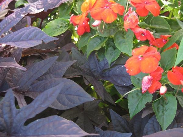 Принесла пару фото с выходных, уже видно начало осени, но пока тепло и солнечно - 7