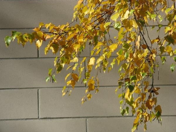 Танюша красивые фото, мох и листики дубовые