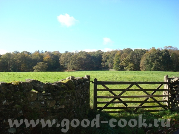 вот такие ворота я открывала )) набрели мы на лес, где я, с щенячим восторгом пыталась прогуляться,...