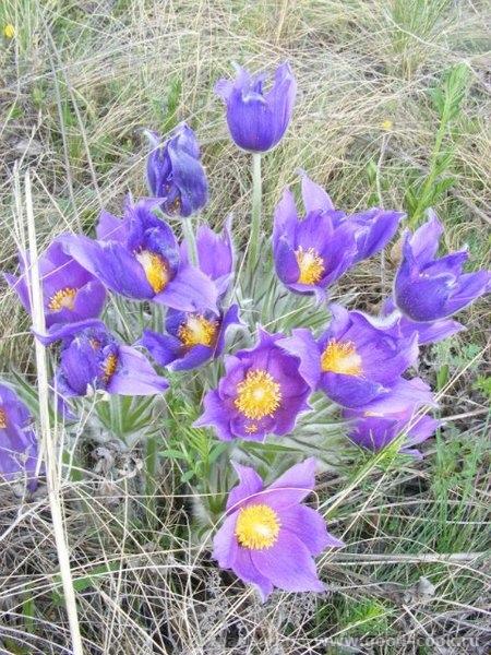 Выкладываю фотоотчет с поездки на шашлыки 22 апреля - 18