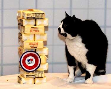 16 января, в Лондоне кот Мисчиф смотрит на 5 кг масла, соответствующих количеству веса, который он...