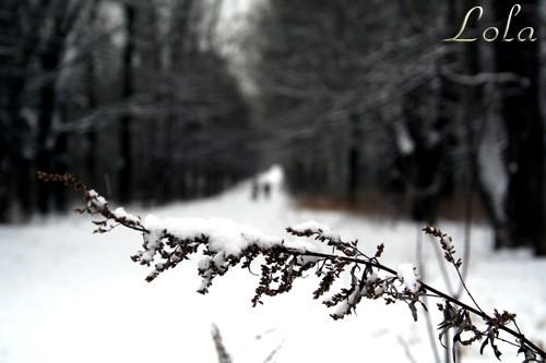 В Москве наступила зима - 4