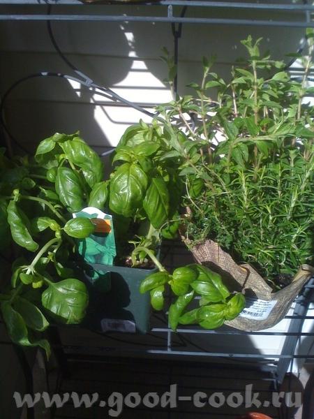 Мне пожалуйста , ведерочко салатика Алисочка, вот значит мой огородик, на балконе