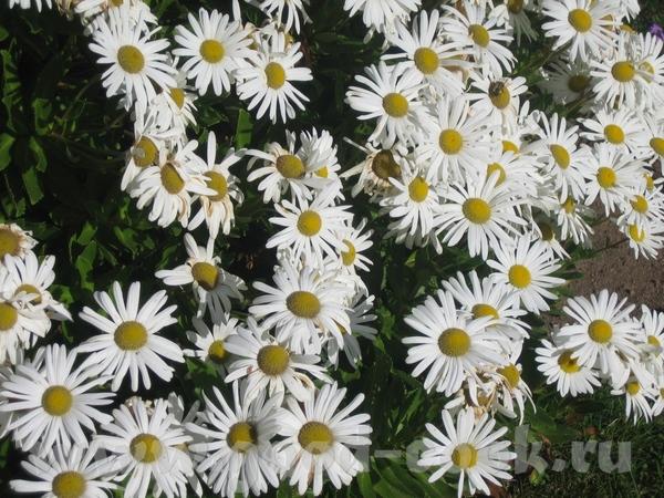 а потом мы набрели на что то типа маленького ботанического сада с красивыми цветами - 7