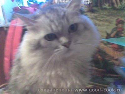 Вот кот, которые прожил с нами много лет
