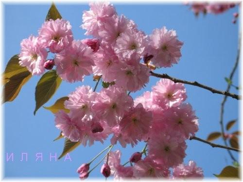 Теперь цветочек ТОГО дерева, не знаю толком как оно называется