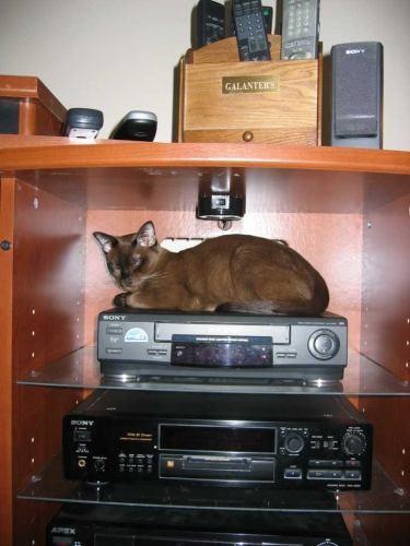 наш Кошачий нашел себе место для сна, елы