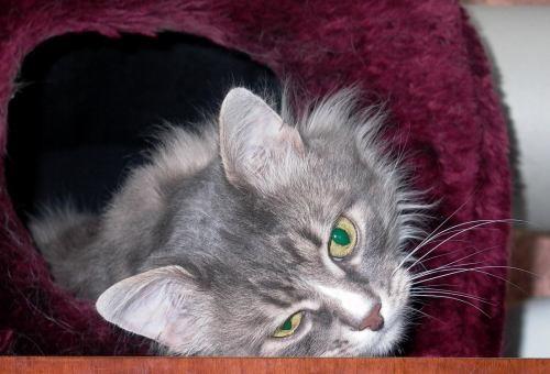 потому и купили под потолок, кот , что в Москве остался, любит прыгать на дверь с пола, а с нее уже...