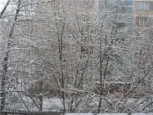 Вчера утром мы проснулись и увидели такую картину за окном - снова началась зима -