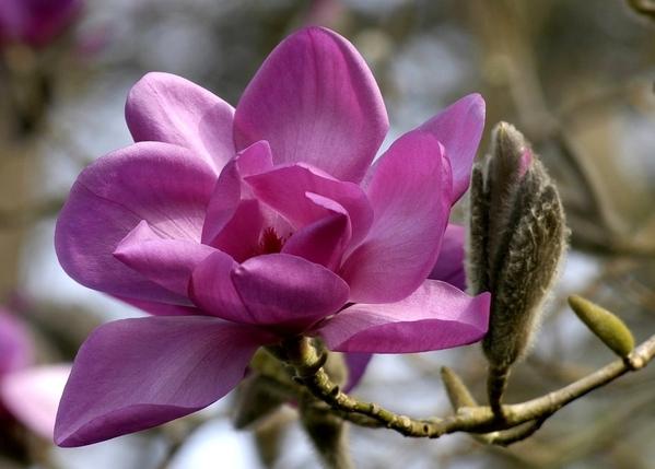 Так ведь это очень xорошо что появилось больше народа- форум на то и держится Весна, цветут магноли... - 2