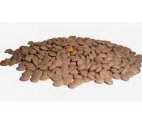 коричневая чечевица
