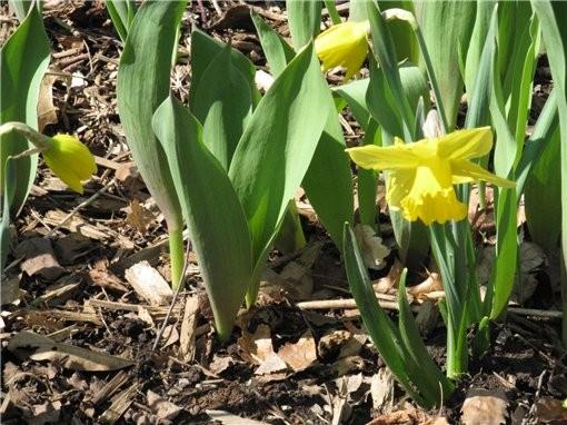 весна пришла и к нам, первые цветущие деревья и цветы в ботаническом саду, запахи стоят я вам скажу... - 7