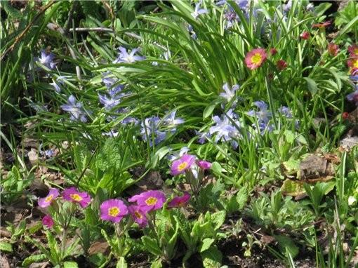 весна пришла и к нам, первые цветущие деревья и цветы в ботаническом саду, запахи стоят я вам скажу... - 4
