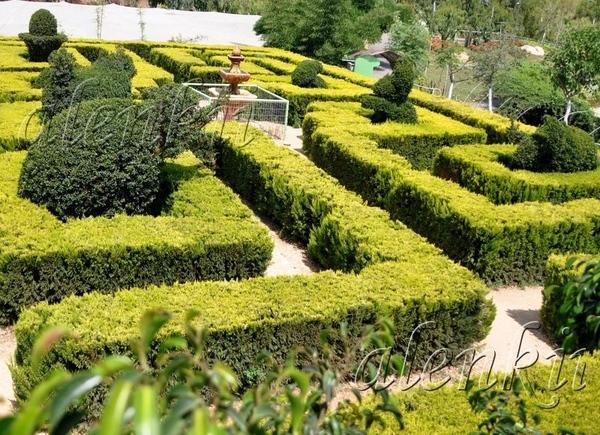 От прогулки в саду мы получили огромное удовольствие и незабываемые впечатления